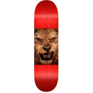 "MINI LOGO CHEVRON ANIMAL 8.5"" LION DECK RED"